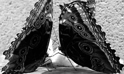 butterflies-kungfu
