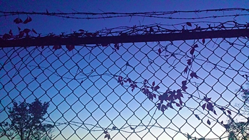 fence-20151026_183138