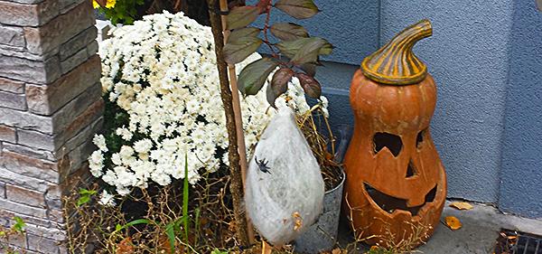 pumpkin_20151025_121256