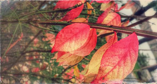 leaves (c) in medias res by Melinda Kucsera