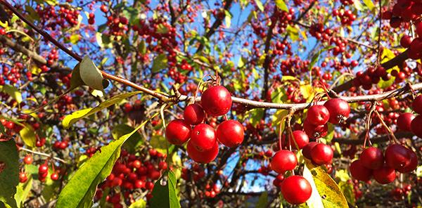 berries20151101_150420