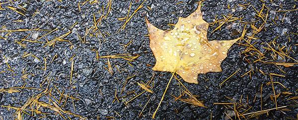 Leaf (c) in medias res by Melinda Kucsera