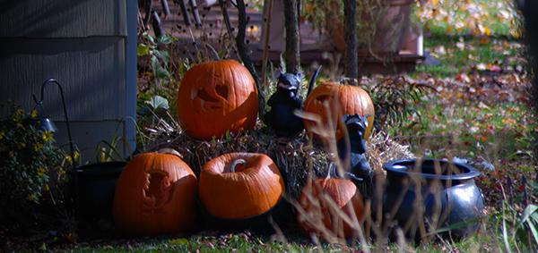 Pumpkins (c) in medias res by Melinda Kucsera