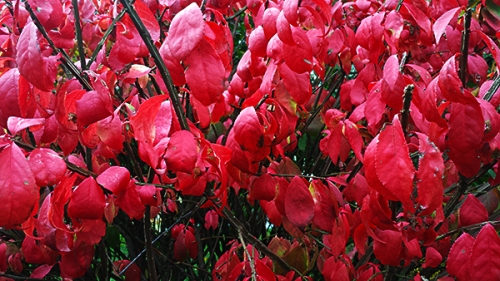 red_20151101_135330
