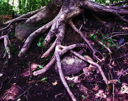 Tree (c) in medias res by Melinda Kucsera